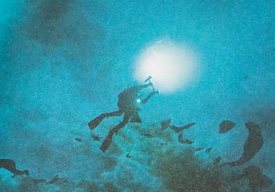 Coquillages, les sentinelles des océans